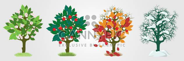 Vector illustration of colorful seasons trees on white background - Free vector #126447