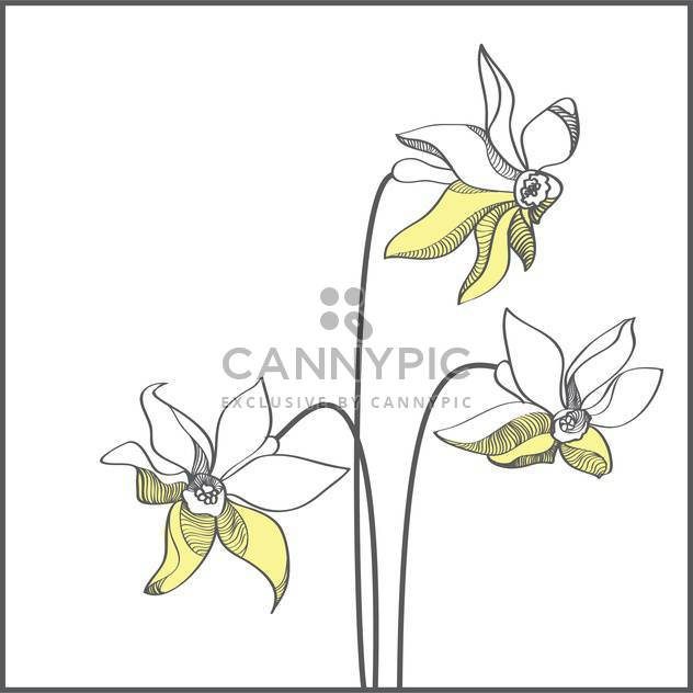 Stylized yellow narcissus flowers on white background - Free vector #127397