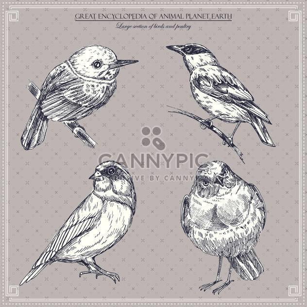 set of vector graphic birds illustration - Free vector #135257