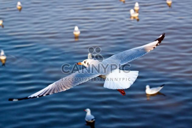 Seagull flying over the sea - Free image #136297