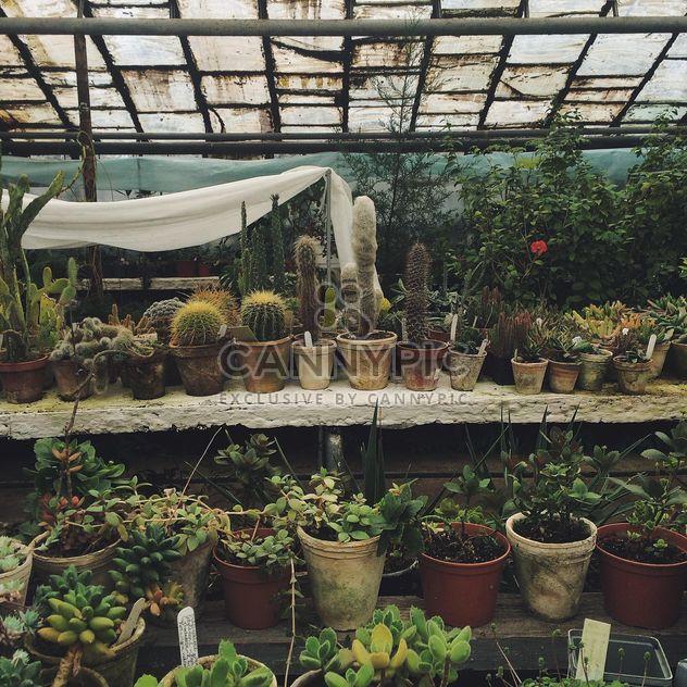 Растений в ботаническом саду - бесплатный image #136387
