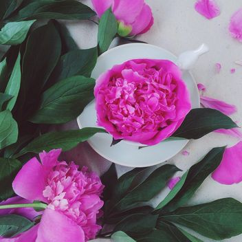 Beautiful pink peonies - image gratuit(e) #136507