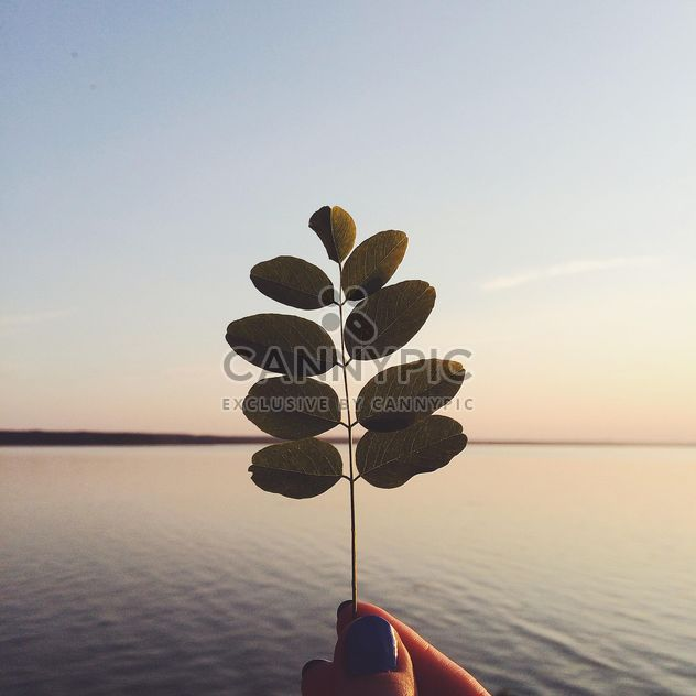 Twig with leaves in hand at sunset - Free image #136597