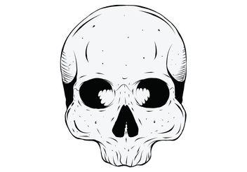 Human Skull - Kostenloses vector #139297