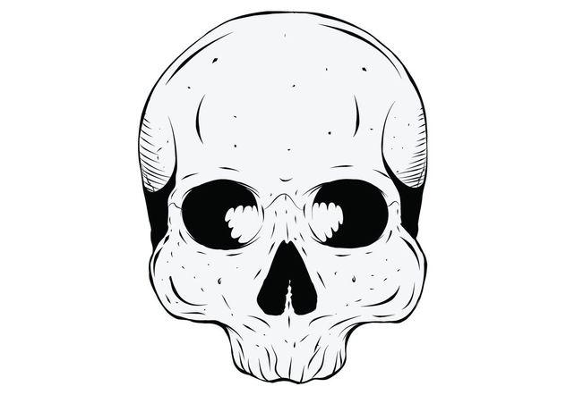 Human Skull - Free vector #139297