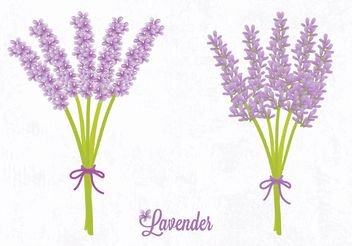 Free Vector Lavender Flower - vector #145807 gratis