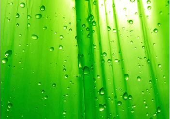 Dew Drops - Free vector #146077