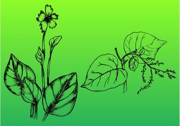 Hand-Drawn Plants - Free vector #146377