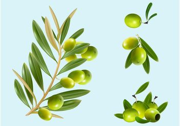 Olives - Kostenloses vector #147577