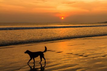 Dog walking on sunset beach - image #147917 gratis
