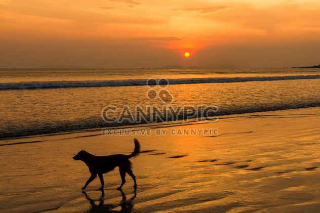 Dog walking on sunset beach - Free image #147917