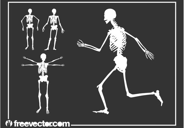Skeletons Graphics - Free vector #148647