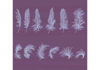 Textured Feather Vectors Set - Free vector #156917