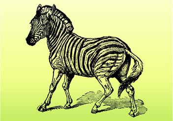 Zebra Vector - Kostenloses vector #157157