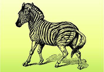 Zebra Vector - бесплатный vector #157157
