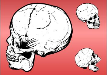 Skull Drawings - Free vector #158687