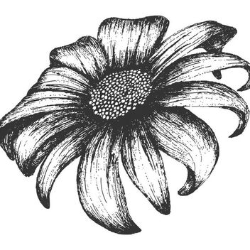 Grungy Hand Drawn Sunflower - vector gratuit(e) #170777