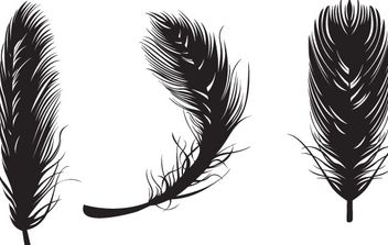 Three black feathers - vector #172717 gratis