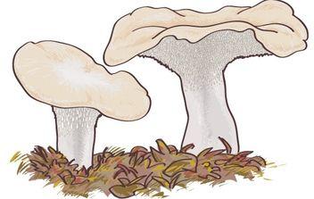 Mushroom Boletus edulis - Kostenloses vector #177957