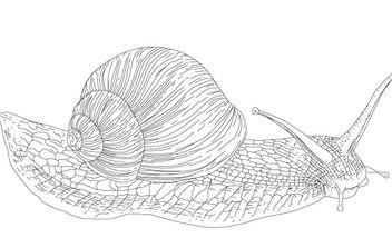 Vector Snail - Free vector #177997