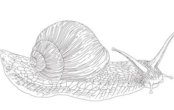 Vector Snail - Kostenloses vector #177997