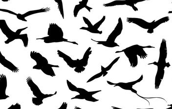 30 Different Flying Birds - vector gratuit #179037