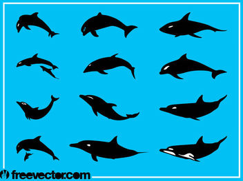 Silhouette Dolphin Pack - Free vector #181307