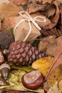 Dried autumn leaves and fruits - Kostenloses image #182917