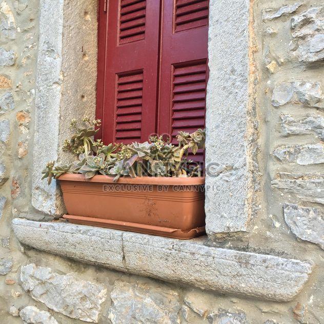 Цветы на окне - бесплатный image #183147