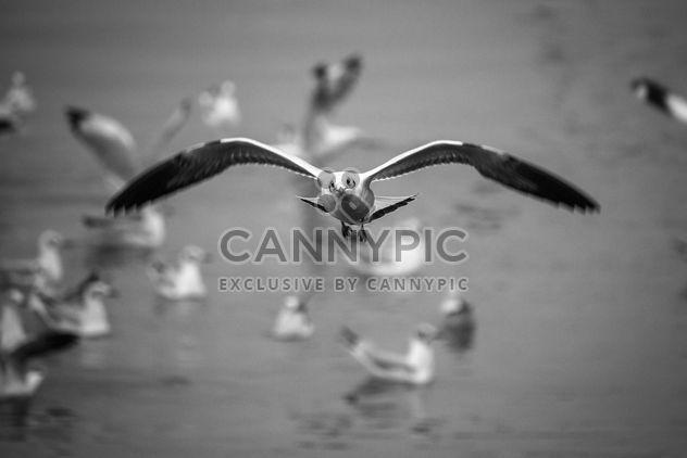 Gaivotas voa - Free image #183447
