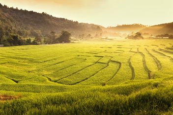 Green fields in the morning - image #183477 gratis