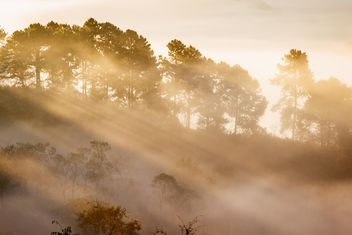 Sunrise light through the fog - Free image #183487