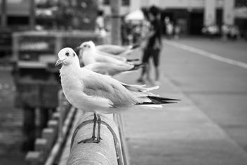 Seagulls sitting on parapet - image #183537 gratis