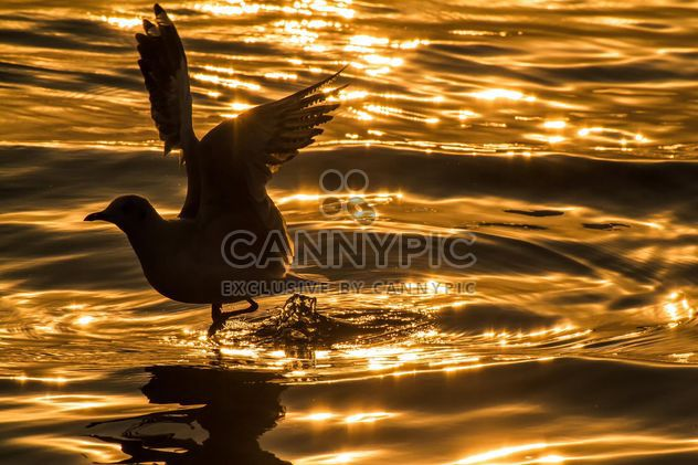 Seagull at sunset - Free image #183887