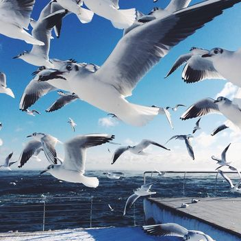 Hungry sea gulls - image #183957 gratis