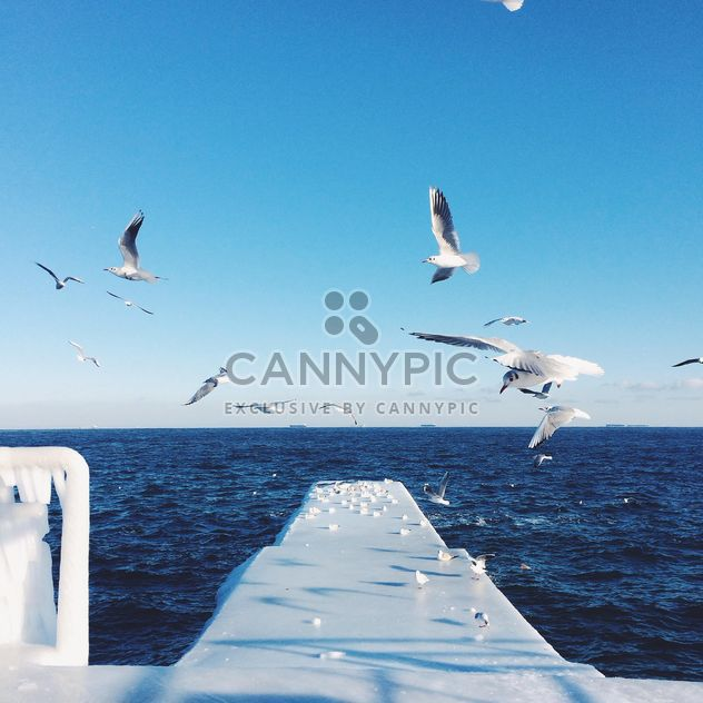 Seagulls flying over the sea - Free image #183967