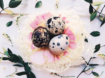 Easter quail eggs - Kostenloses image #184227