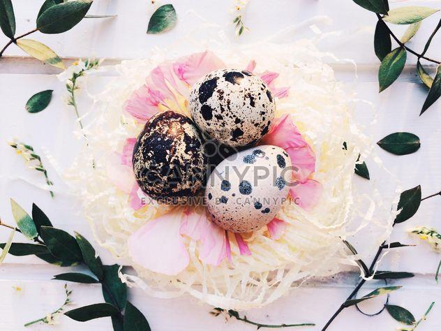 Ovos de codorna de Páscoa - Free image #184227