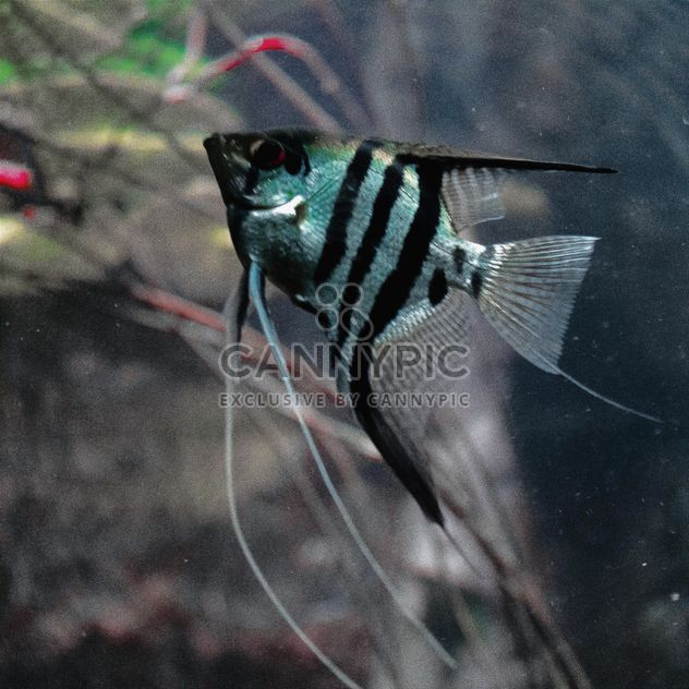 Gestreiften Fisch - Kostenloses image #184527