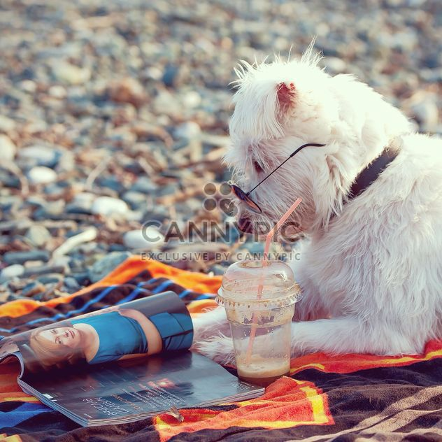 bearded white dog on the beach reading news - Free image #186037