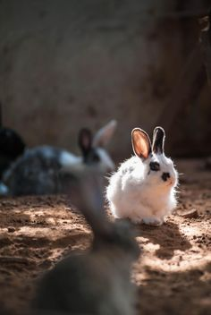 Rabbit#cage#feed#eat#food#fruits#fruit# - Free image #186437