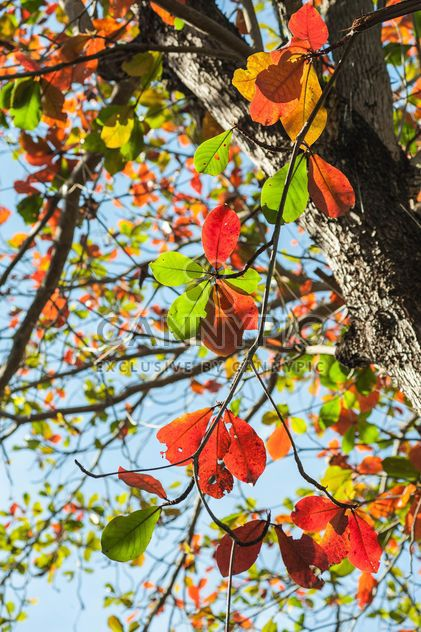 Feuilles colorées sur une branche d'arbre - image gratuit(e) #186547