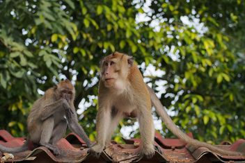Couple of monkeys - image gratuit #186557