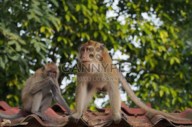 Casal de macacos - Free image #186557