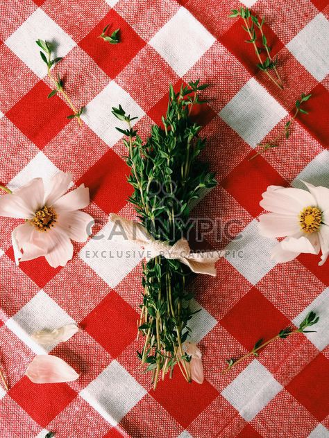 Bunch of thyme and white flowers - Free image #186617