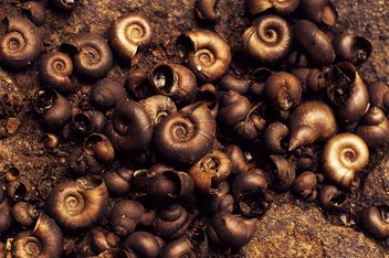Background of brown shells - image #186657 gratis