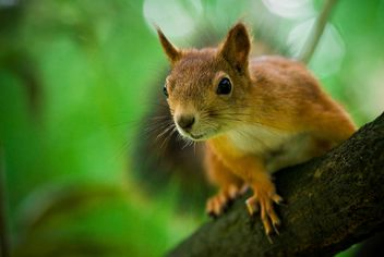 squirrel on the tree - image #187707 gratis