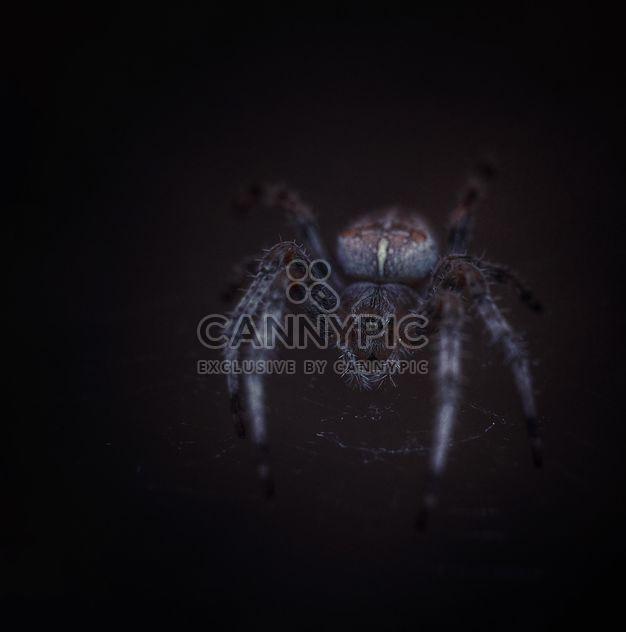 Grosse haarige Spinne - Free image #198217