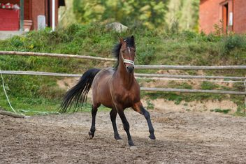 Brown horse on a walk - image #198667 gratis