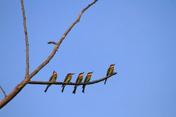 Kingfisher birds on branch - image #199027 gratis